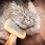 أسباب تساقط شعر القطط