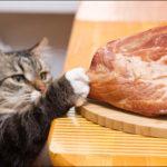 اهمية البروتين في طعام القطط