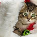 مرض الحساسية عند القطط
