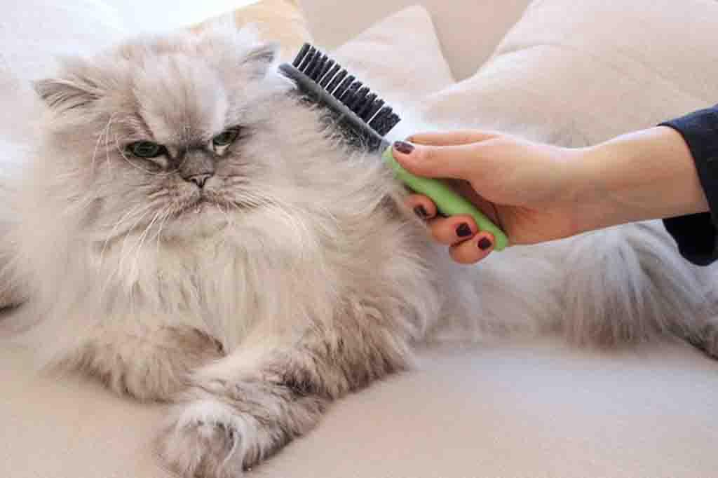 هناك العديد من اسباب تساقط شعر القطط بعضها مرضي وبعضها سلوكي