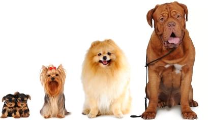 ما هي موانع تطعيم الكلاب