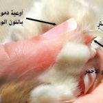 تقليم أظافر القطط بالطريقة الصحيحة كيف أقص أظافر القطة