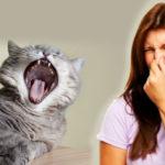 ربما لاحظت اختلاف رائحة نفس قطتك في بعض الأحيان وبدون أسباب واضحة, لذلك نوضح لك أسباب تغير رائحة فم قطتك وكذلك طرق التخلص من رائحة الفم الكريهة في القطط