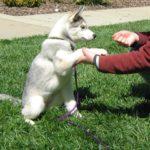 النصائح الأساسية لتدريب الكلاب