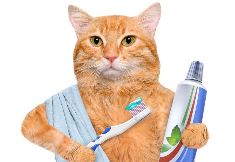 Cat Dentist Video