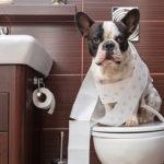 طرق تدريب الكلاب الصغيرة على التبول