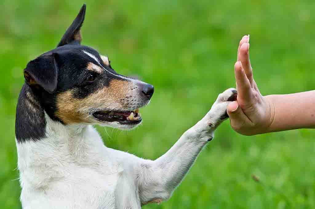 ترويض الكلاب يحتاج صبر و مجهود حتى ترى نتيجة جيدة