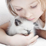 كيفية التعامل مع القطط الصغيرة