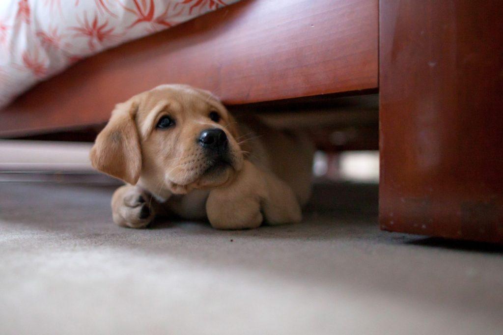هناك أيضًا نوع آخر من أنواع الكلاب وهذا النوع يكون انطوائي نوعًا ما فيشعر بالخوف والضيق عند دخوله إلى المنزل