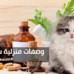 3 وصفات منزلية في العناية بشعر القطط ومنع تساقطه