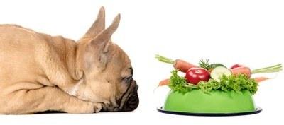الخضروات هامة جدا لرفع مناعة الكلب و زيادة حيويته