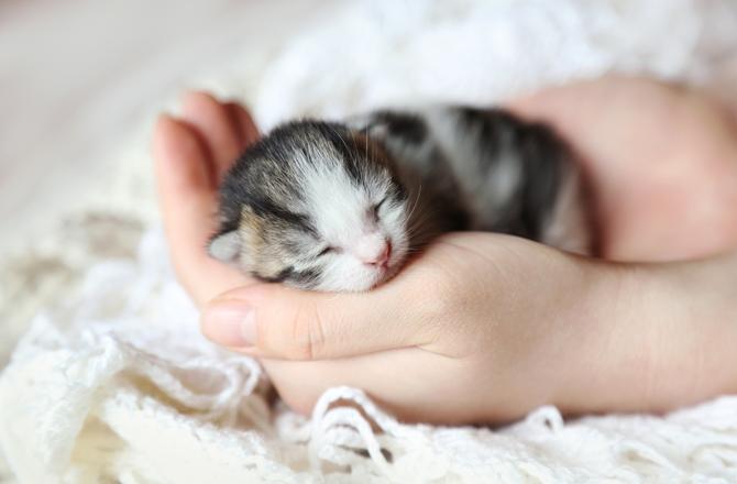 القطط حديثة الولادة لا تستخدم الليتر بوكس (صندوق الفضلات)