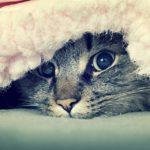 القطط والشتاء العناية بالقطط في فصل الشتاء