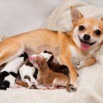 أعراض الولادة عند الكلاب ومراحل الولادة بالتفصيل