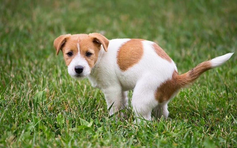علاج الاسهال عند الكلاب