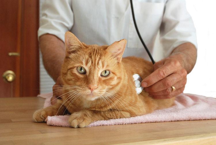 إذا تأكد الطبيب من إصابة قطتك بالديدان يقوم بوصف أقراص درونتال للقطط حسب الوزن وشدة الإصابة
