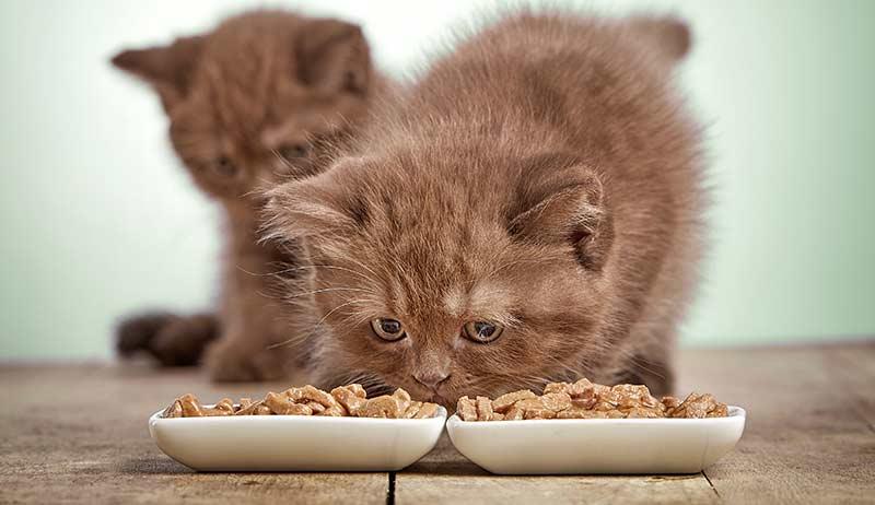6e5989d2e جدول طعام القطط الصغيرة من سن شهرين - دليل العيادات البيطرية | دكتور ...
