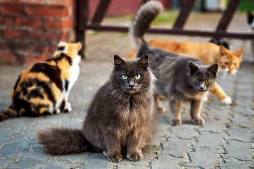 من اجل تهدئة القطط في موسم التزاوج قم بابعاد القطط الذكور عنها قدر المستطاع