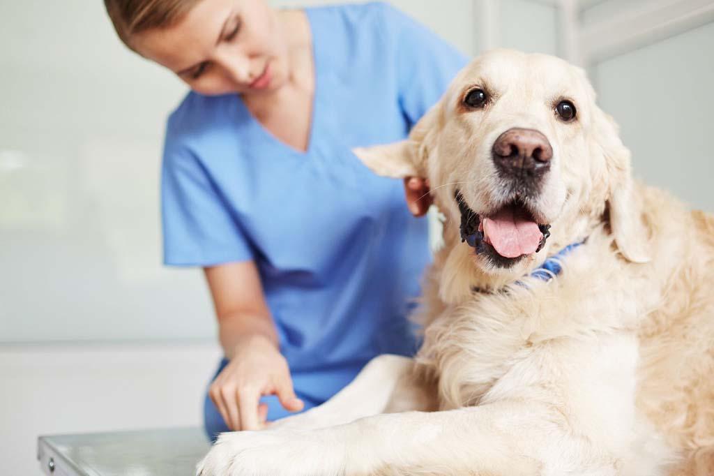 ميعاد حيض الكلاب بعد الولادة ربما يكون بعد 4 أشهر في المتوسط