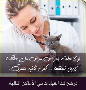 89a7616f2de2e هل يمكن علاج القطط بالاعشاب ؟ 7 أعشاب تفيد في علاج أمراض القطط ...