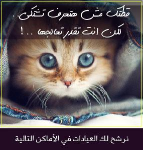 هل تعرف القطط اولادها  أو صاحبها عن طريق حاسة الشم ؟ Cat-Ad-4