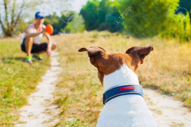 التدريب اليومي يساعد في علاج الامساك عند الكلاب بشكل طبيعي وبدون ملين للكلاب