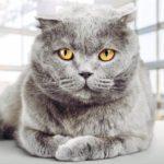 كيف يعمل عقل القطط 5 حقائق تعرفها لأول مرة