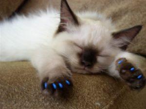 أخطار تحدث بسبب عملية نزع أظافر القطط