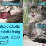 علامات ولادة القطط بالصور كيف تعرف ان قطتك ستلد