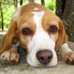 الديدان في الكلاب .. الأعراض والعلاج والوقاية منها