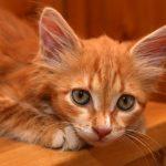 علاج الجرب عند القطط وأسبابه بالصور