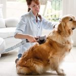 فوائد قص شعرالكلاب والقطط بشكل منتظم