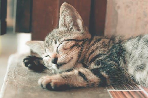 نوم القطط بشكل مبالغ فيه قد يكون علامة على المرض