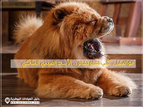 تتميز هذه السلالة من كلاب التشاو تشاو بمظهر يشبه الأسد بسبب فرو الشعر الكثيف والرأس الكبير واللون المميز