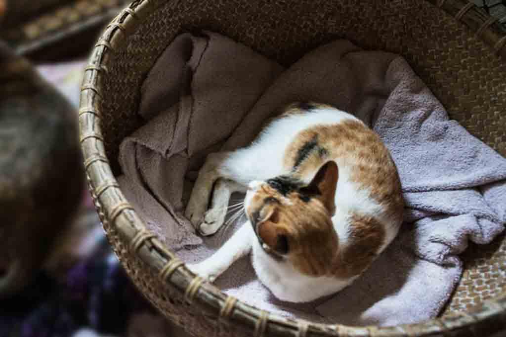 تبدا القطط في البحث عن مكان آمن للولادة قبلها بأسبوع تقريبا