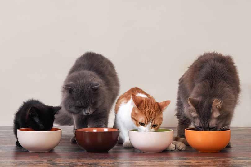 تختلف كمية الطعام حسب وزن القطط