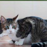 تغذية القطط التي تعاني من الاسهال