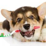 تنظيف اسنان الكلاب في المنزل