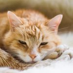 خطوات علاج تسمم القطط وعلامات التسمم بالتفصيل