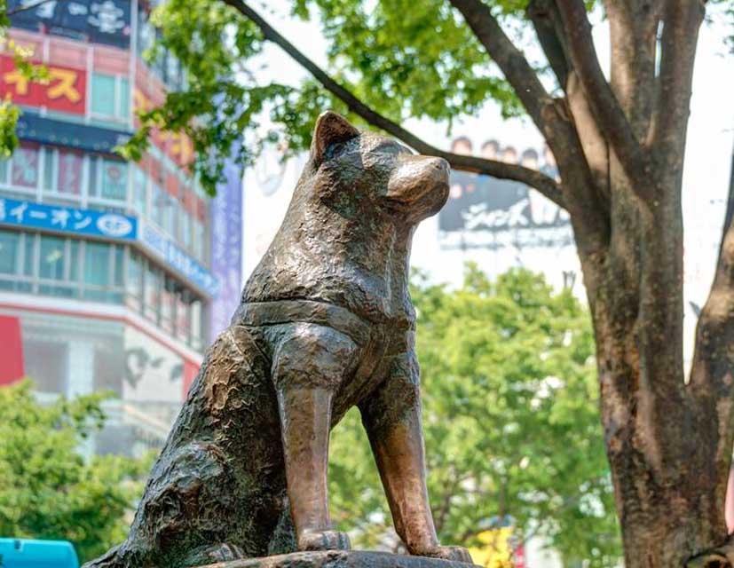 صورة تمثال هاتشيكو في اليابان