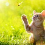 هل القطط الشيرازي تأكل الحشرات