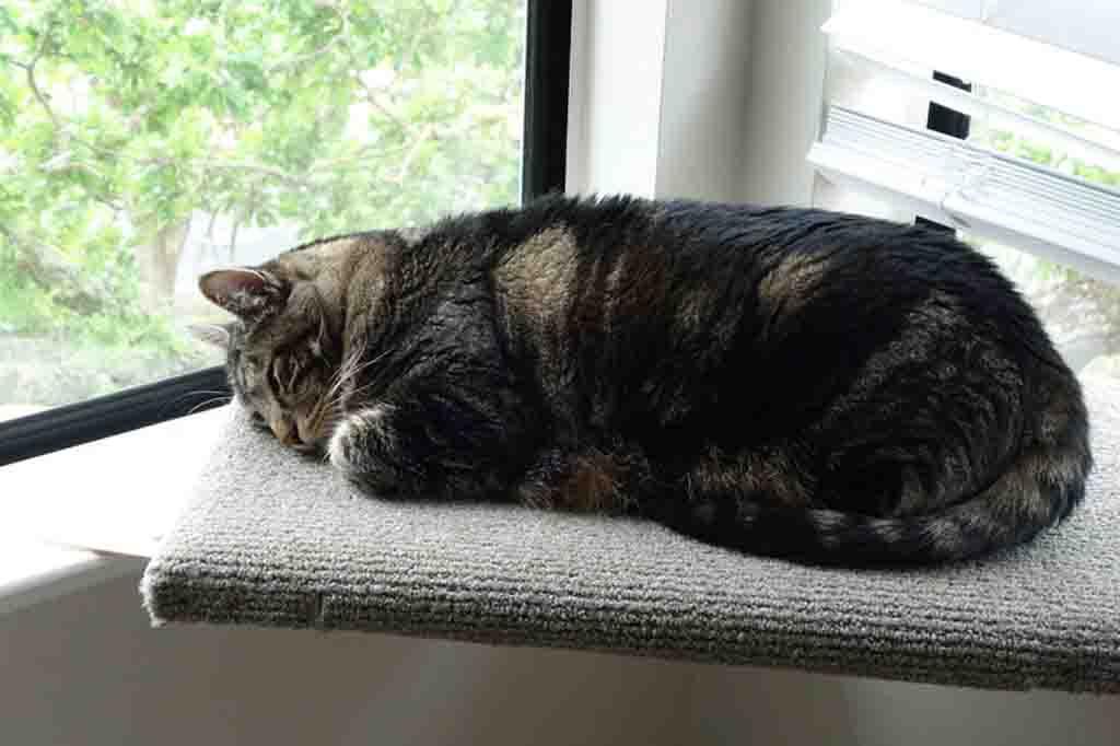 النوم لفترات اكثر من المعتاد من علامات التهاب القولون عند القطط