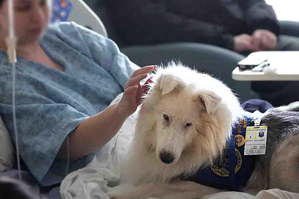 تم استخدام بعض الكلاب للكشف على السرطان في دراسة حديثة