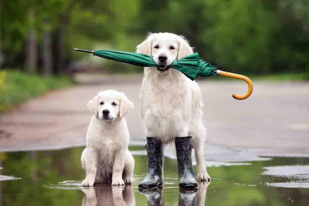 ستلاحظ ان كلبك يتنبأ بالعواصف قبل حدوثها