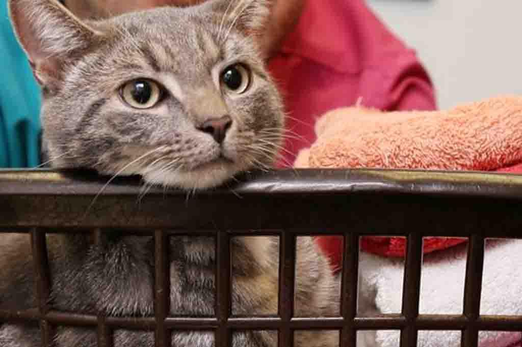 ستوقظك القطط في معاد ثابت وهذا يدل على ارتفاع معدل ذكاء القطط