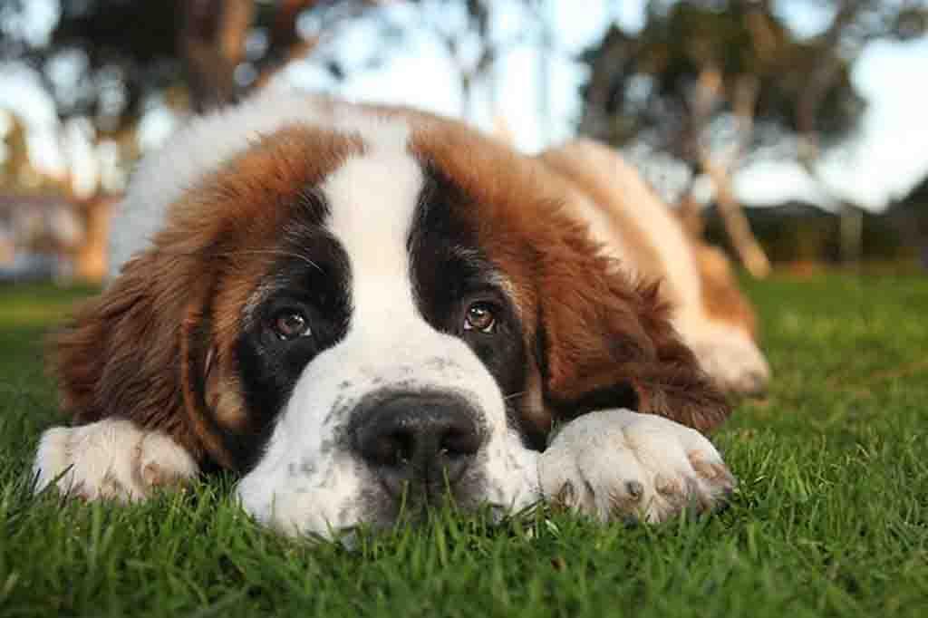 فقدان الشهية و افراز السوائل المهبليه احد اشهر اعراض صديد الرحم عند الكلاب