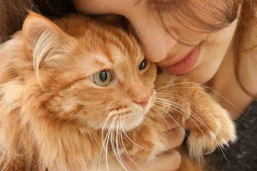 لا تتسلل ولا تفاجئ قطتك لانها ستخاف وتهرب منك