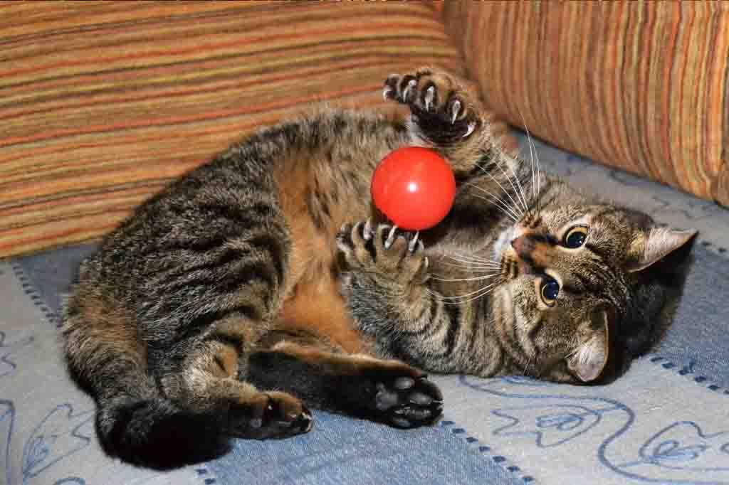 ما هو مدى ذكاء القطط اعرف معدل ذكاء قطتك