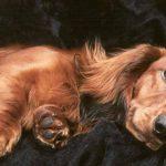ما هي مدة حمل الكلاب