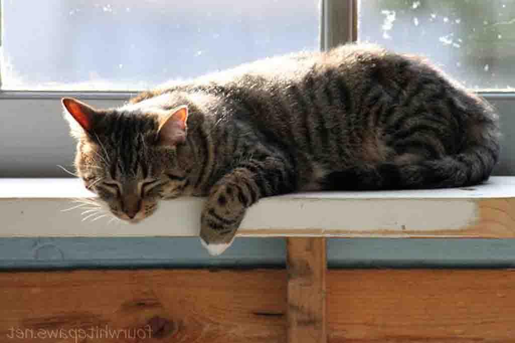 من اعراض فرط افراز الغدة الدرقية للقطط فرط النشاط وكثرة الشرب